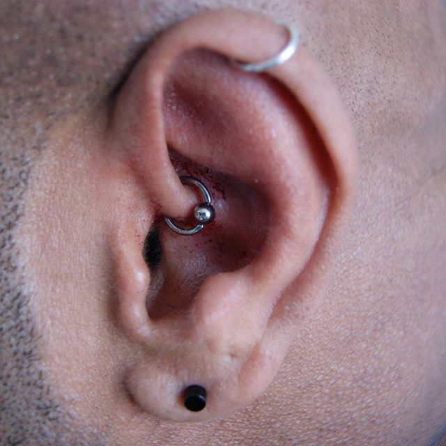 Another happy daith done by Marek. #piercing #darkrosetattoo #marekkurzelowski